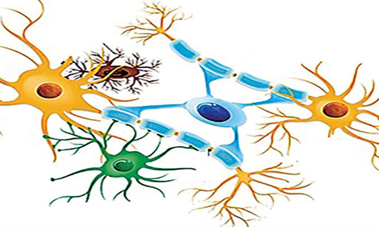 انواع یاخته های عصبی از زیست یازدهم