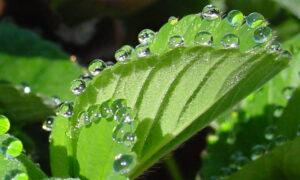 دیواره یاخته ای در گیاهان